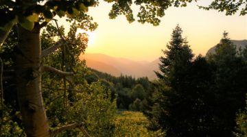Descubra o que fazer quando se compra imóvel em Área de Preservação Ambiental sem saber.
